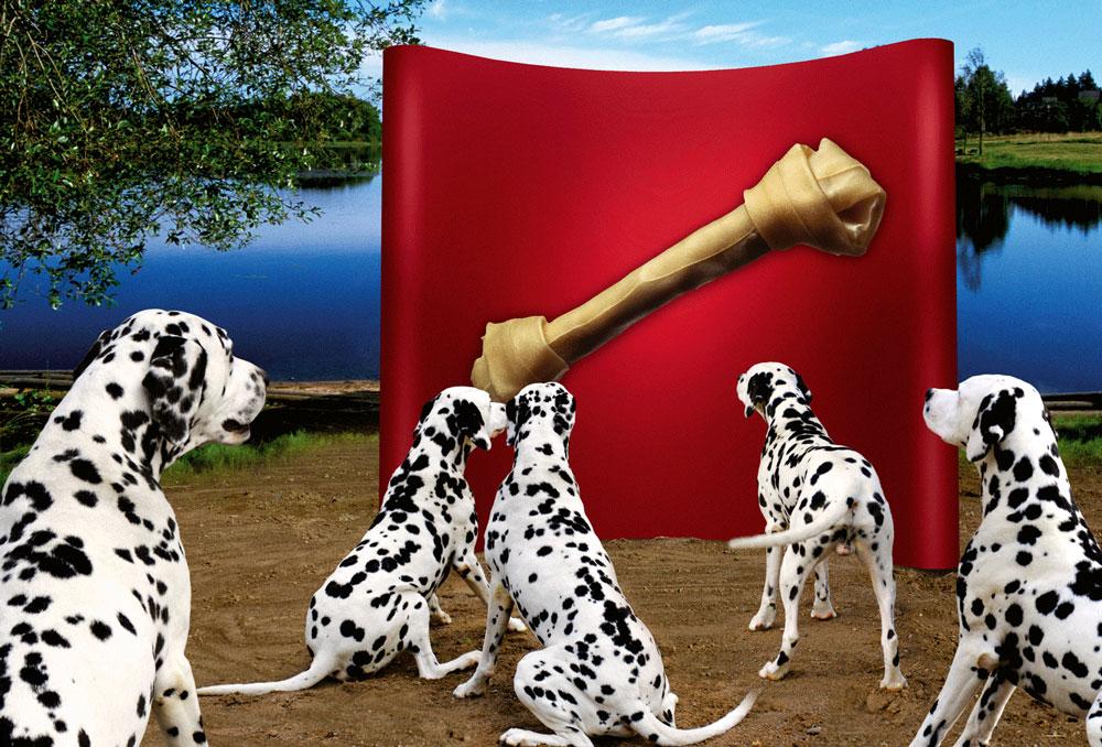 Stand parapluie dalmatien